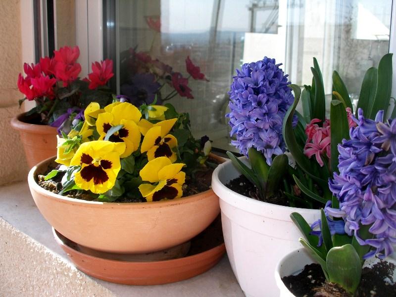 Δες, λοιπόν, λουλούδια, λίγο πριν έρθει