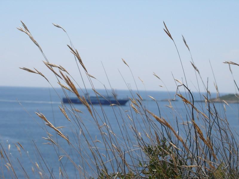Έρχεται το πλοίο πίσω από τα αγρωστώδη